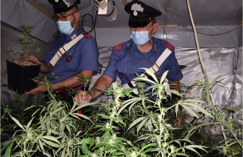 Sezze, operazione antidroga dei carabinieri: sequestrata una serra di marijuana
