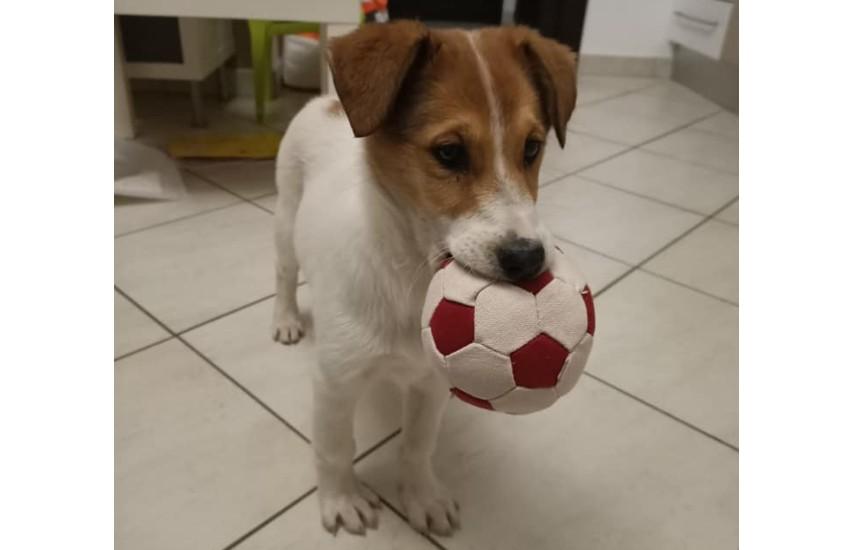 L'associazione Chance for dogs organizza una cena di beneficienza a Latina
