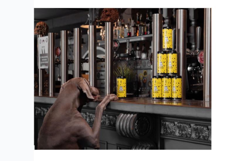 """Ponzano Veneto, ecco """"Pawse"""" la prima birra per cani"""