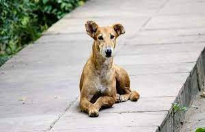 Cani randagi a Milazzo. Sindaco Midili interviene sui social per spiegare gli interventi fatti