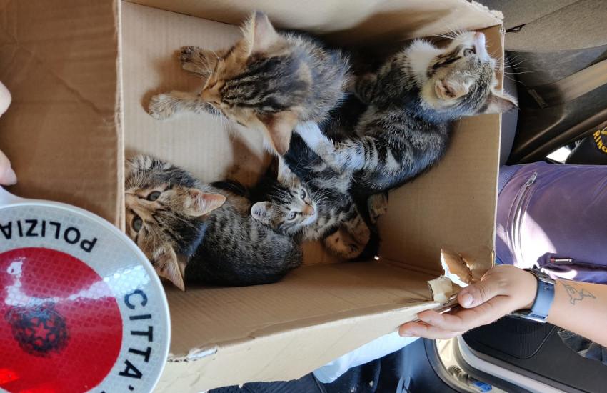 Torino, 4 gattini abbandonati in una scatola: salvati dalla Polizia Municipale (FOTO)
