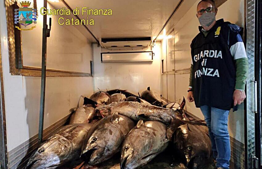 Catania, sequestrati 3.300 kg. di tonno rosso nel porticciolo di Ognina