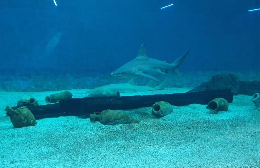 L'acquario di Genova parteciperà a slowfish 2021