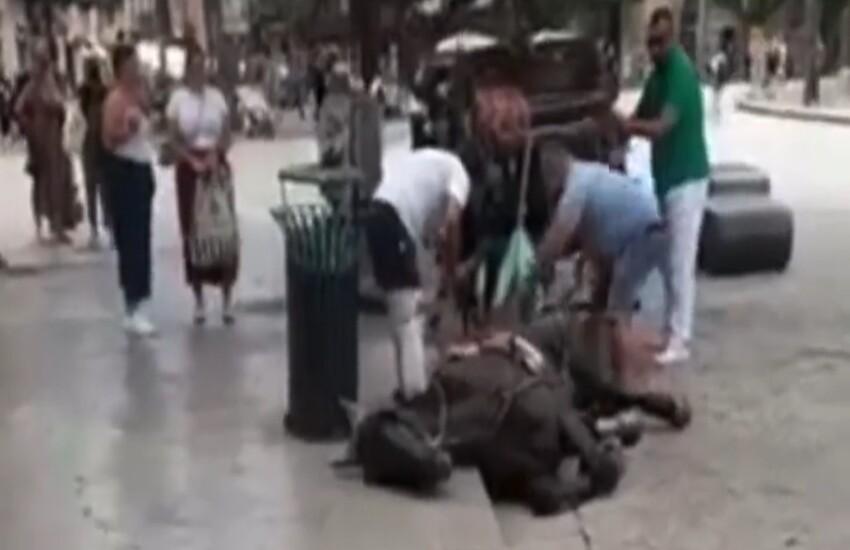 Palermo – Cavallo da traino stremato per il caldo si getta per terra