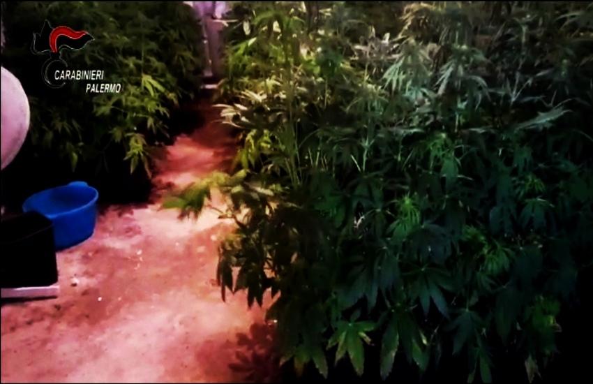 Coltiva due milioni di  Euro di Cannabis indoor a Trabia, arrestato dai Carabinieri
