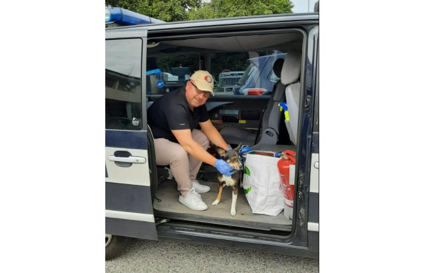 Albignasego, il proprietario viene ricoverato in ospedale: la Polizia locale si occupa di trovare alloggio al suo cane