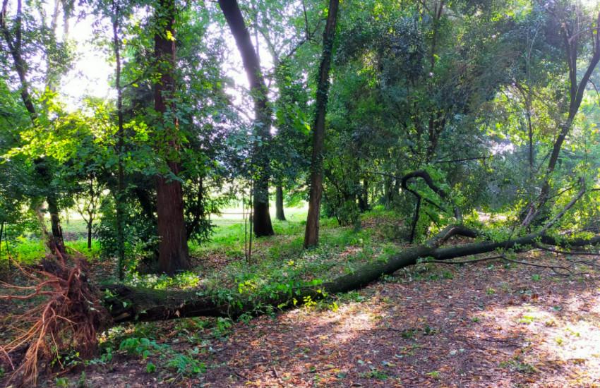 Nuovi danni al parco di Villa Contarini. I tecnici regionali a Piazzola sul Brenta per attivare le procedure di ripristino