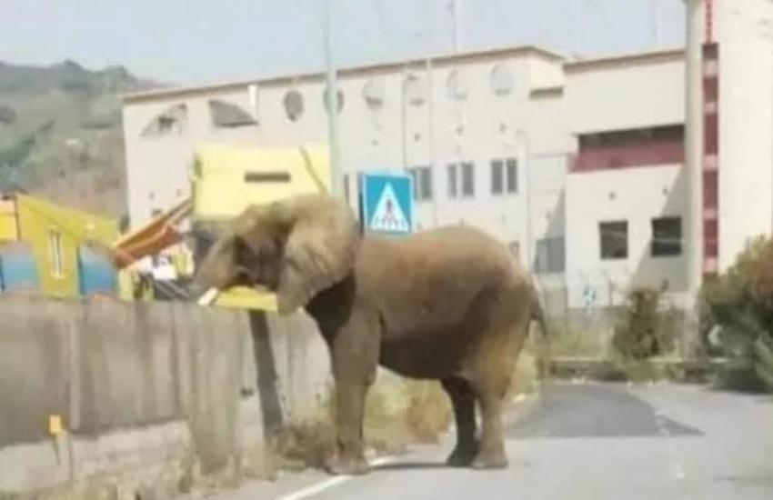 Messina: elefante fugge dal circo e va in giro per la città