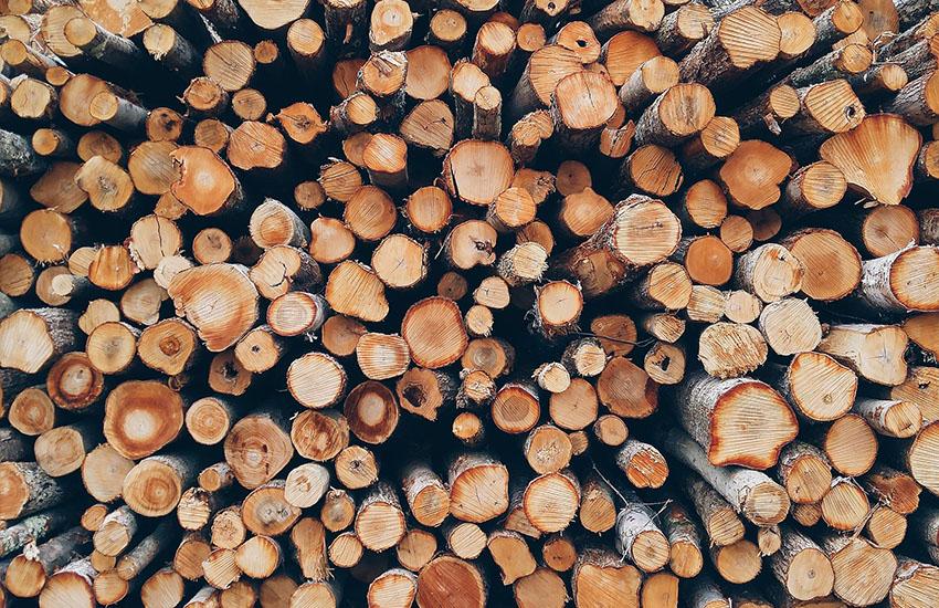 Avellino, denunciato per aver rubato 5 quintali di legna verde