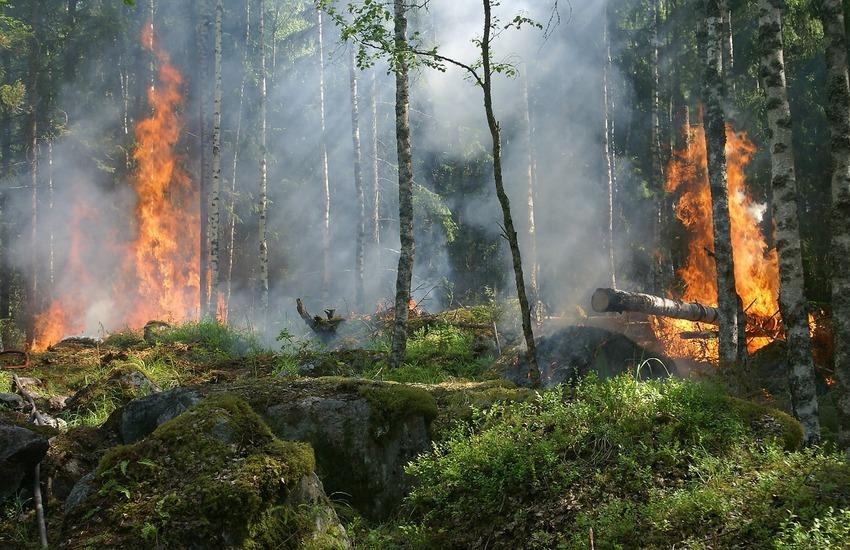 """Incendi: Madonie e Monreale bruciano nella notte, Musumeci: """"Sostegno del governo agli agricoltori"""""""