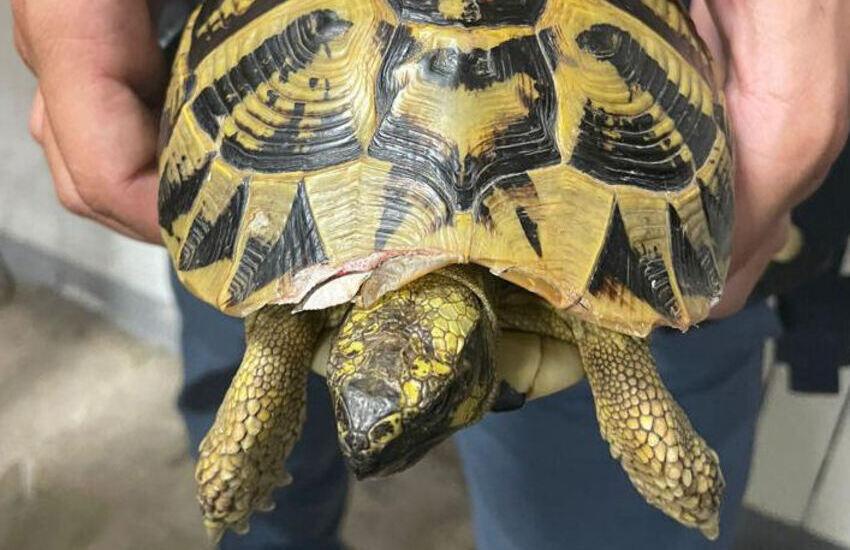 Genova, maltratta una tartaruga, denunciato