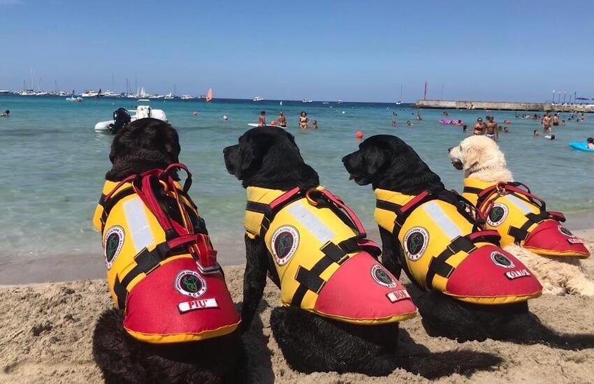 Spiagge libere, cani di salvataggio, in azione, alla Plaia