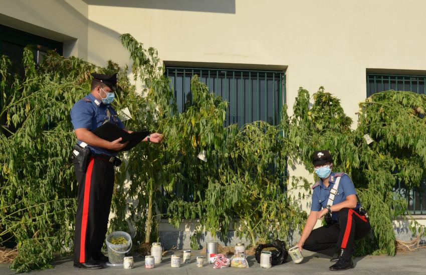 Occhieppo Superiore (BI), coltiva cannabis tra i fiori di montagna: arrestato 37enne