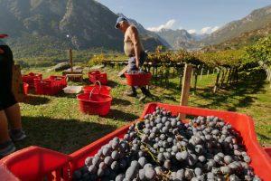Carema, il 25 e 26 settembre torna la festa dell'uva e del vino