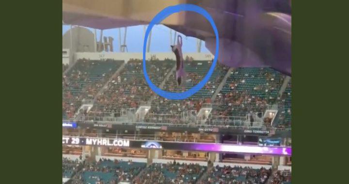 Gatto precipita allo stadio, il salvataggio è spettacolare e patriottico (Video)