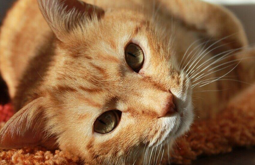Storia di Stubbs, il gatto eletto sindaco in un paese dell'Alaska