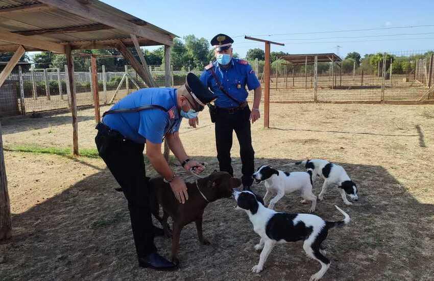 Roma, deteneva cani in pessime condizioni igieniche ammassati in un terrazzo, sequestrati 13 cani privi di microchip