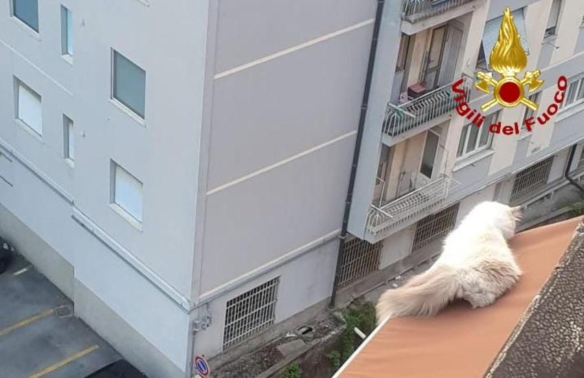 Genova, soccorso gatto rimasto in bilico su una tenda al 7° piano