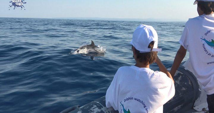 MareCamp: il monitoraggio delle specie marine protette del golfo di Catania condensato in un video