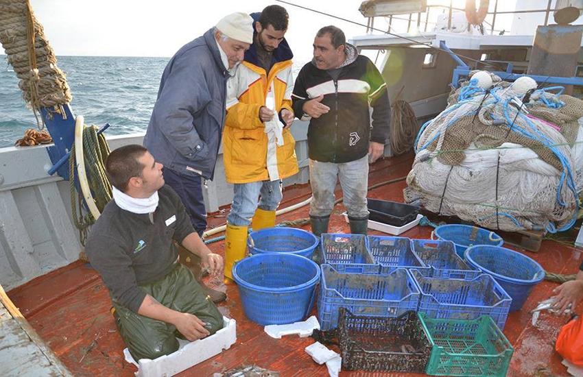 Pesca, lo studio dell'Università di Catania: necessari interventi della scienza e della politica