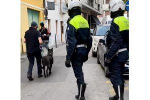 Treviso, arrestato uno spacciatore nel quartiere di San Zeno