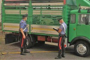 Randazzo, intercettati e denunciati due razziatori di bestiame in trasferta da Messina