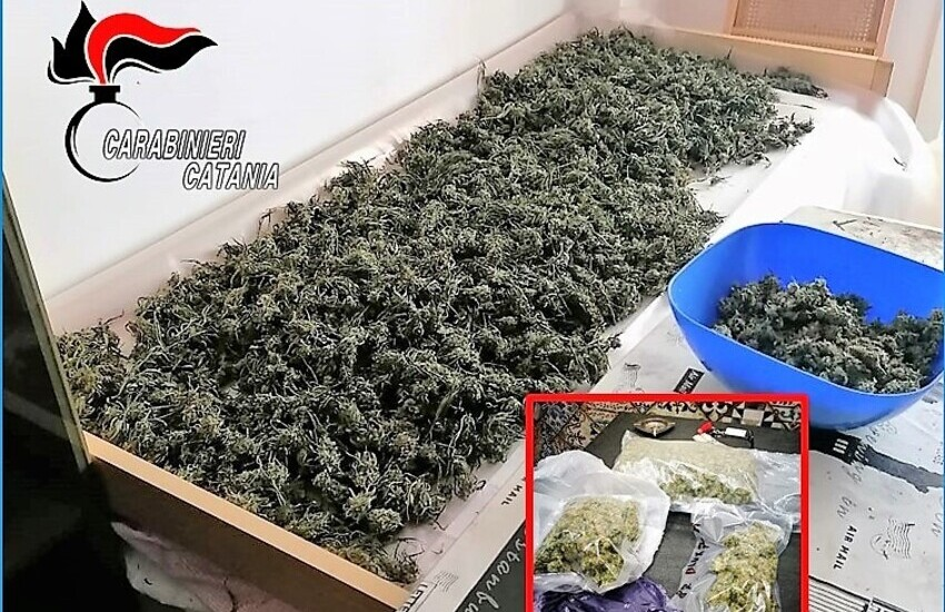 Mascali, Maxi Blitz antidroga, sequestrati 9 kg di marijuana a Giardini Naxos
