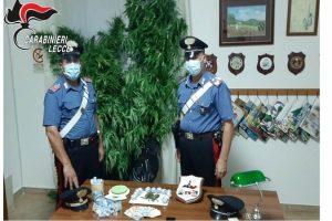 Sorpreso a innaffiare piante di cannabis, arrestato per spaccio 60enne
