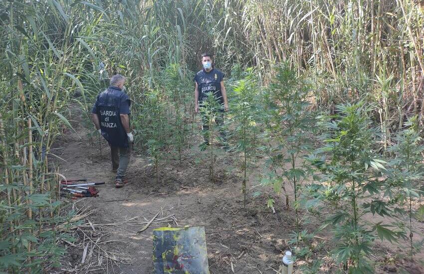 Partinico, scoperta piantagione marijuana vicino al Santuario di Madonna del Ponte