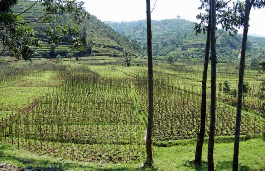 Rwanda: muore Théoneste Bagosora, figura di spicco dell'esercito durante le atrocità del 1994 (800mila uccisioni in cento giorni)