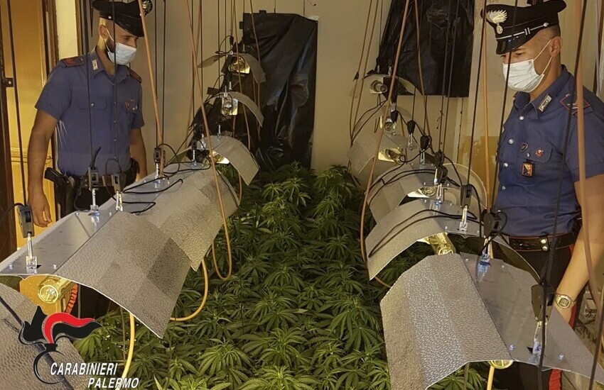 Partinico, scoperta serra di cannabis indoor. Arrestato 25enne