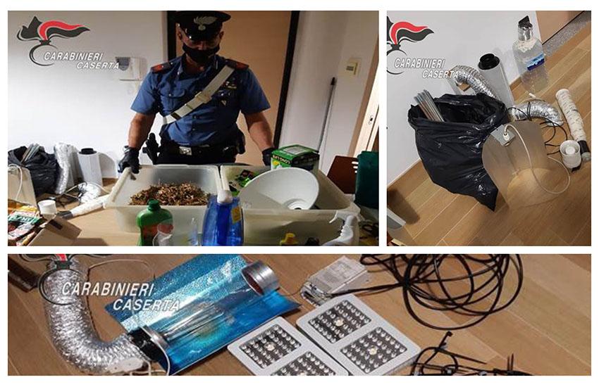 Caserta, i carabinieri scoprono appartamento con coltivazione di marijuana