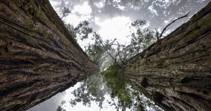 California, Sequoia national park: le fiamme minacciano gli alberi più grandi del mondo